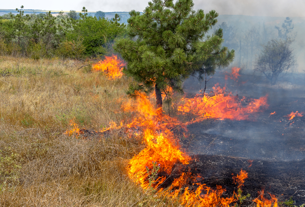 8 Essential Tips to Escape from a Huge Wildfire